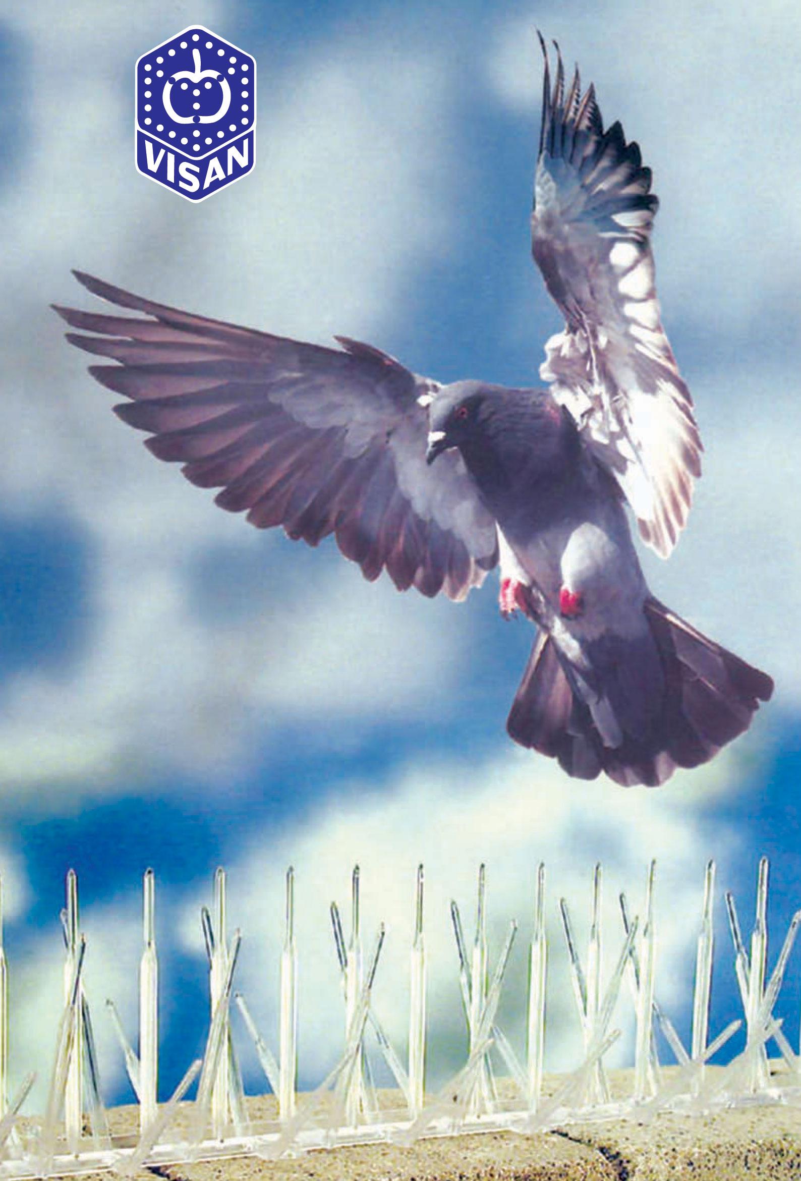 zastita-od-ptica